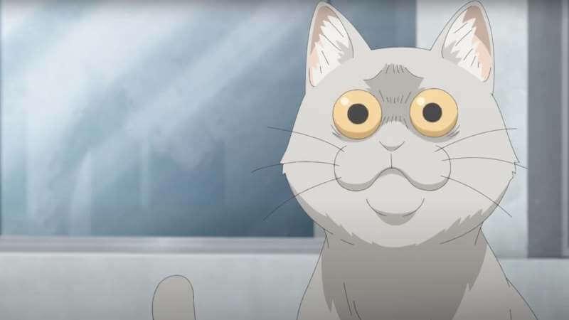 кот из Узаки хочет тусоваться! 2 сезон